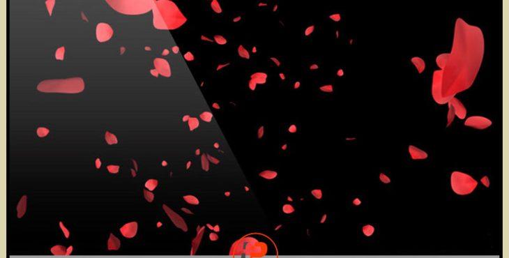 دانلود فوتیج گلبرگ های گل سرخ