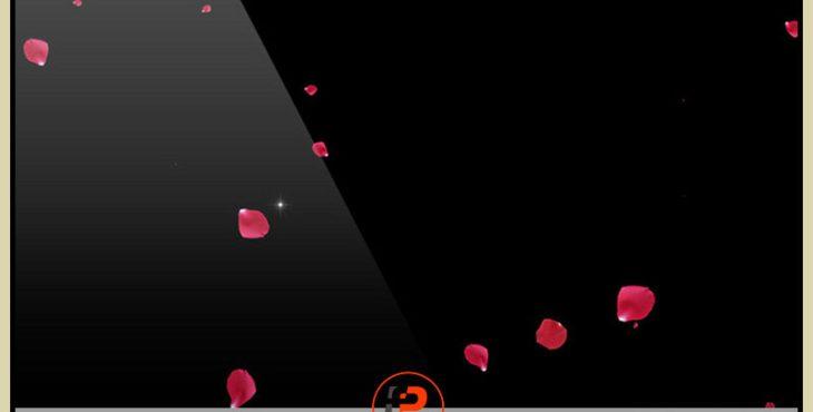 دانلود فوتیج بارش گلبرگ های گل سرخ برای فیلم عروسی